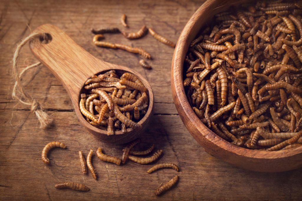 Cría de gusanos de harina
